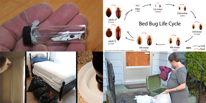 Strange Bed Bugs Interior Design Ideas Clesiryabchikinfo