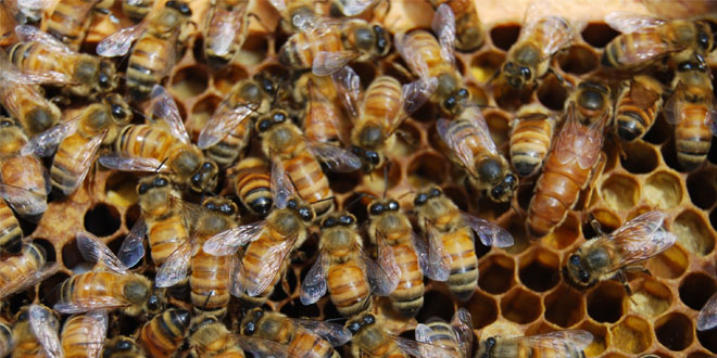 single bbw women in bee Single definition is  a single standard for men and women (3):  winning words from scripps spelling bee quiz learn more from m-w.