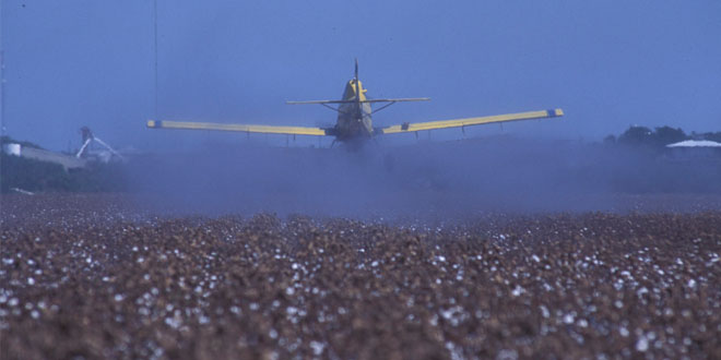 man spraying pesticides