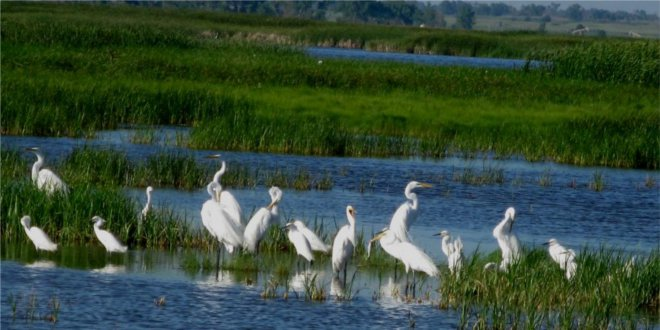 wetland with birds