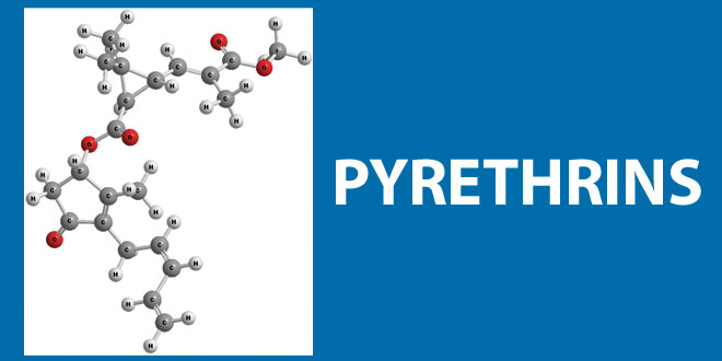 molecular image for pyrethrins