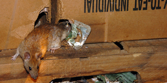 ratbnr How To Look For Pest Control Companies