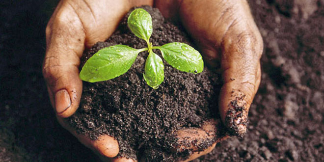 Soil and pesticides for Soil environment